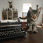 шестипалый кот
