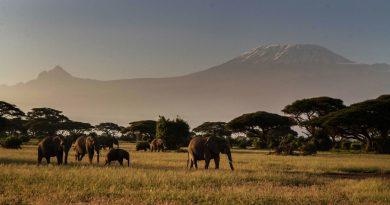 Кения, природа