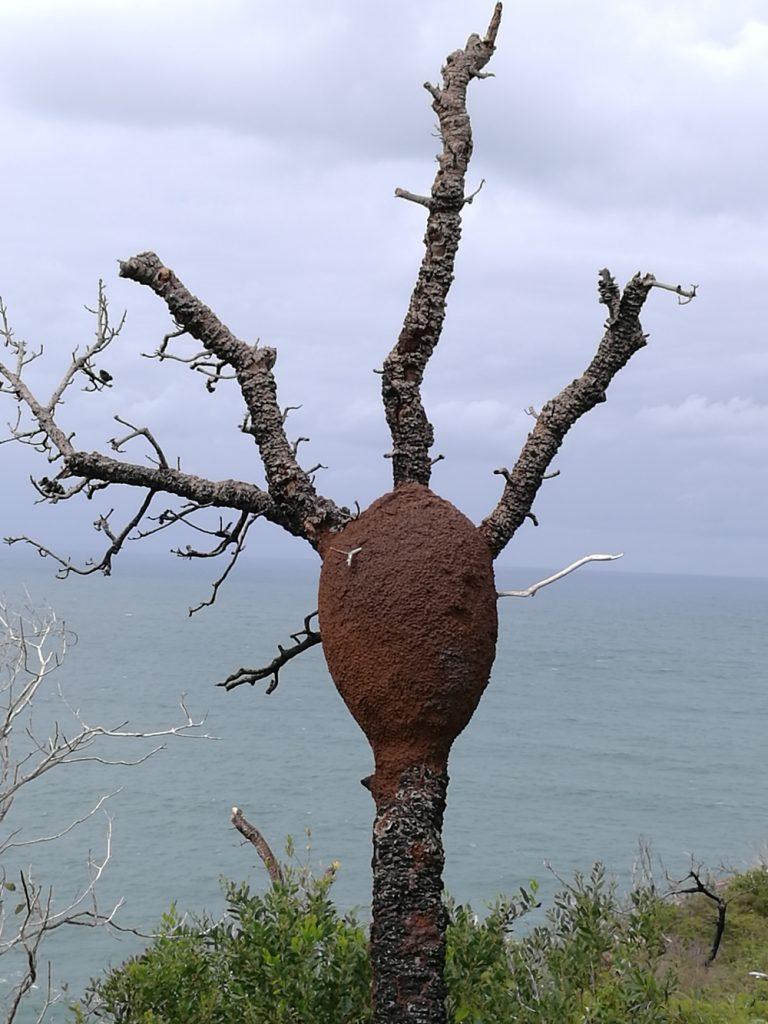 Термитник на дереве