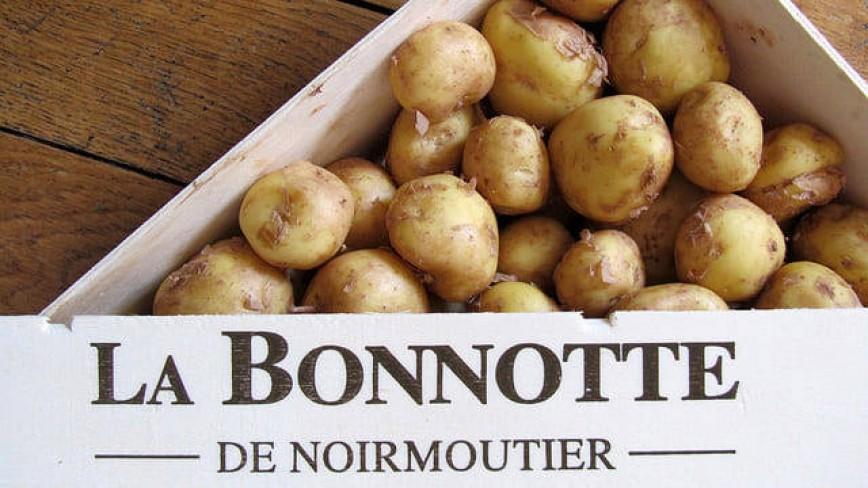 """Сорт картофеля """"La Bonnotte"""""""