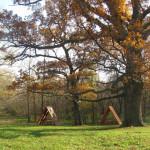 Дмитриевский дуб