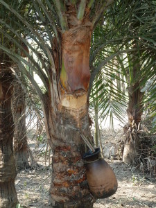 Пальмовый сироп