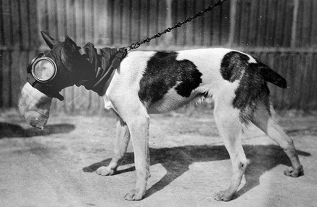 Противогазы для собак