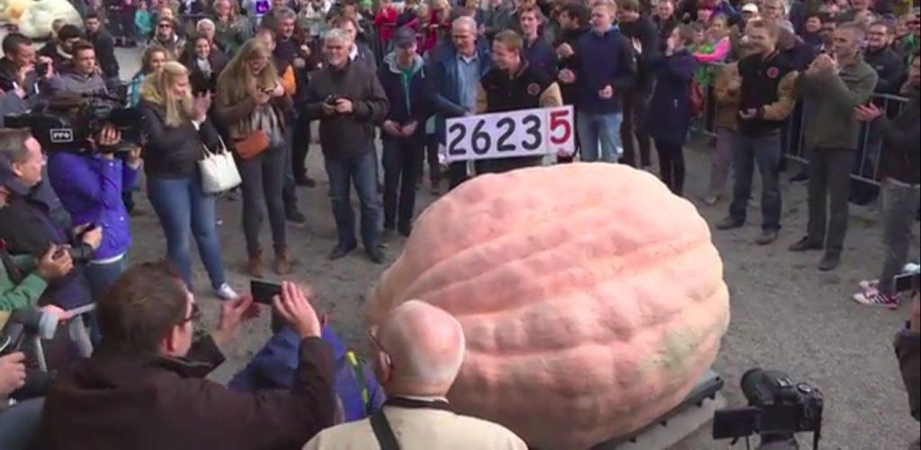 В 2016 году рекорда Криса был побит фермером из Бельгии. Маттиас Виллемайнс вырастил тыкву весом 1190,5 кг.