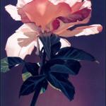 Картины художника Эда Мелла (Ed Mell)