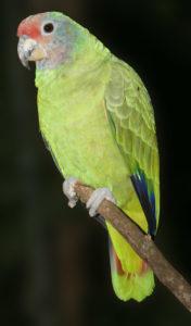 AmazonaPopug