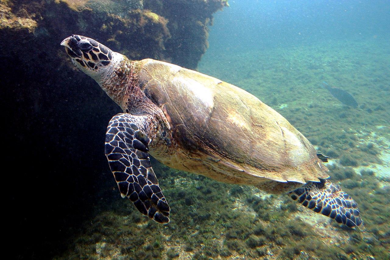 Морские черепахи Бисса.