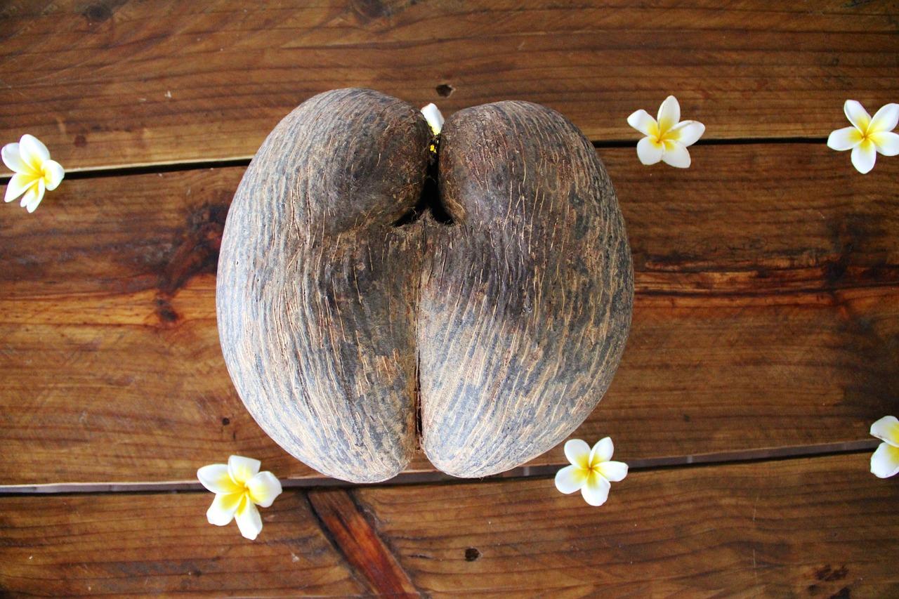Плод сейшельской пальмы