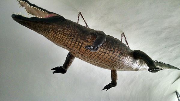 Чучело крокодила из Брно