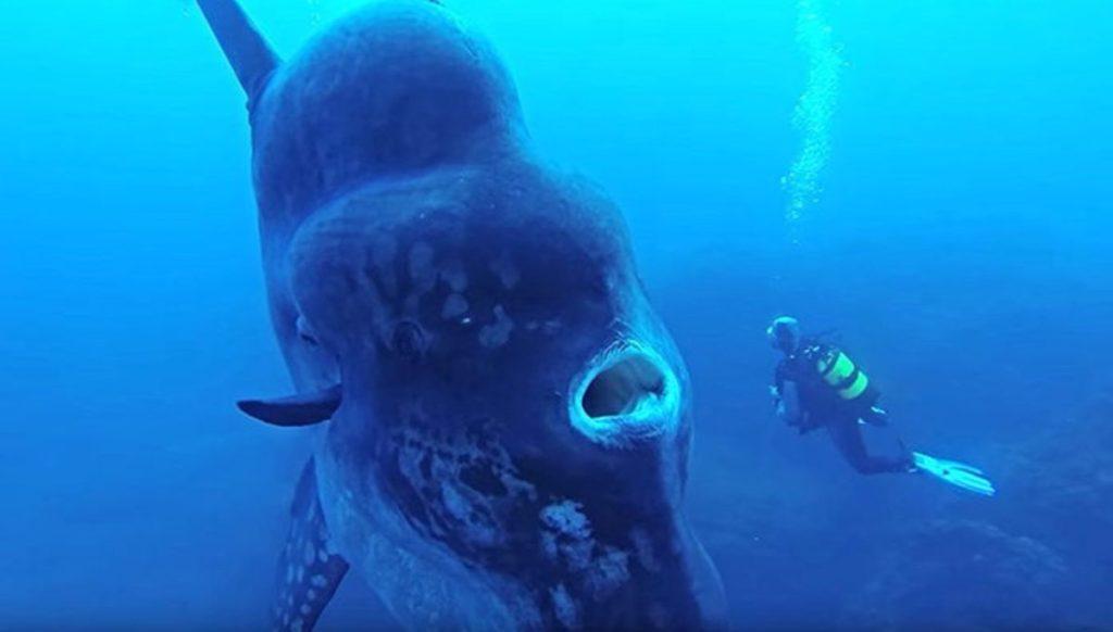Солнечная рыба Худвинкер