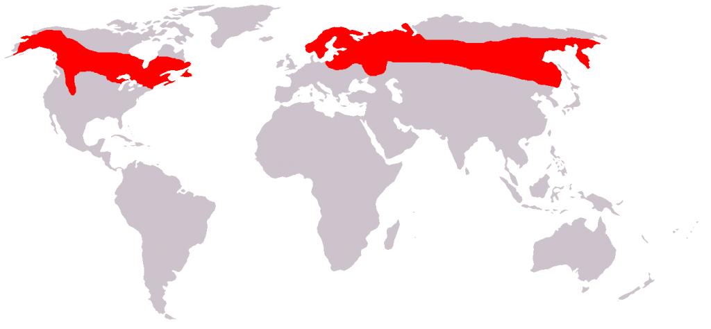 Карта распространения лосей
